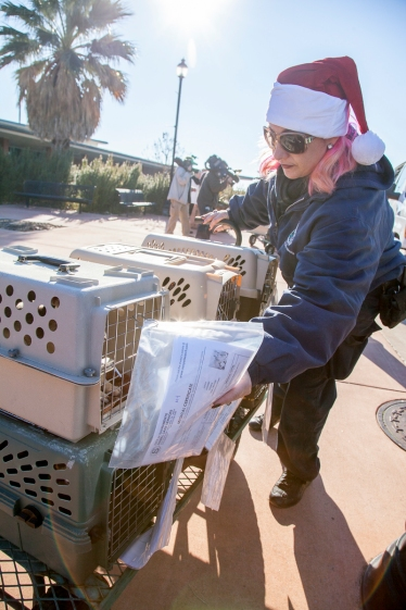 The puppies arrive at Sacramento Executive Airport.