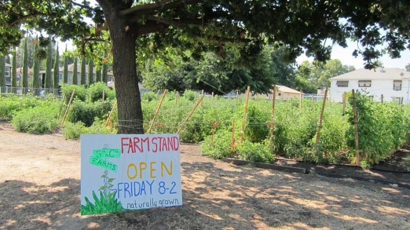 An example of an urban farm in West Sacramento