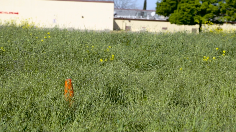 Weeds at this vacant lot are clearly taller than 12 inches as measure by an 18 inch traffic cone.