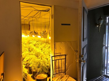 Illegal grow house